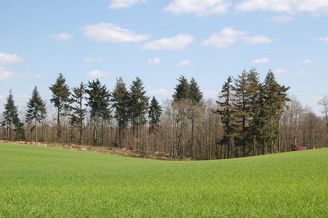 Felling at Harefield plantation