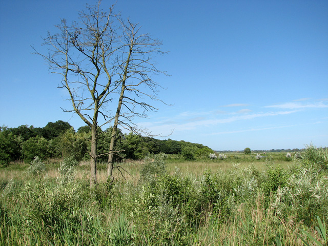 Reed beds in Short Dam Level