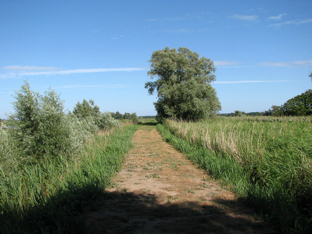 Path between Short Dam Level and the River Waveney