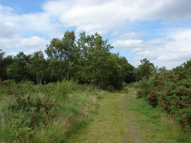 Bisley Common