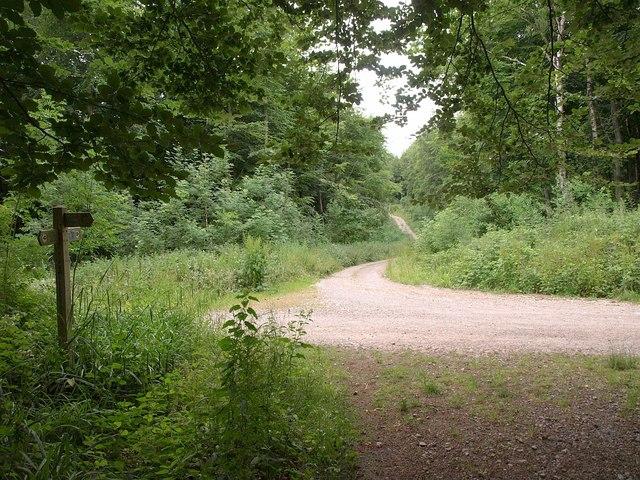 Jubilee Trail in France Firs