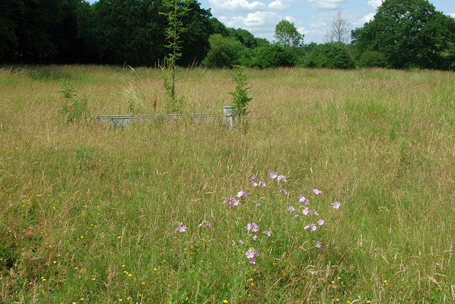 Musk Mallow and cattle trough