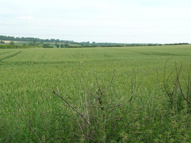 Farmland off Stragglethorpe Road