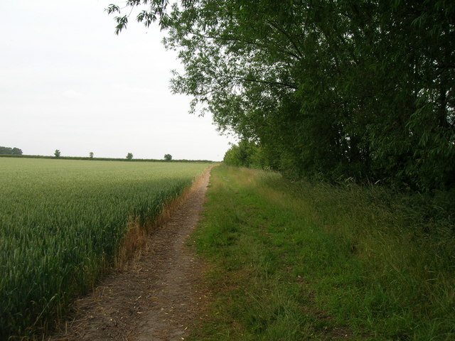 Field margin off Oatfield lane