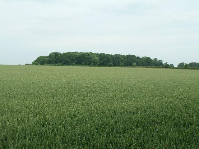 Farmland looking towards Jubilee Plantation