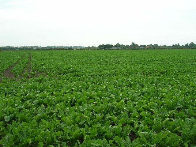Farmland near Bingham