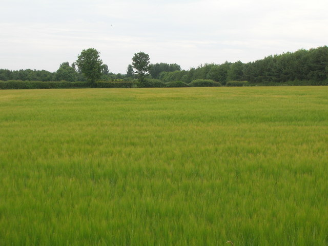 Farmland off Tenman Lane