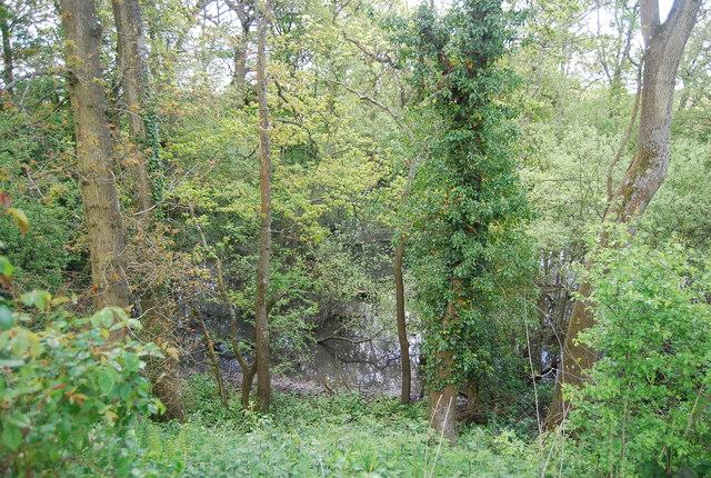 Wooded pond near Hammond's Farm