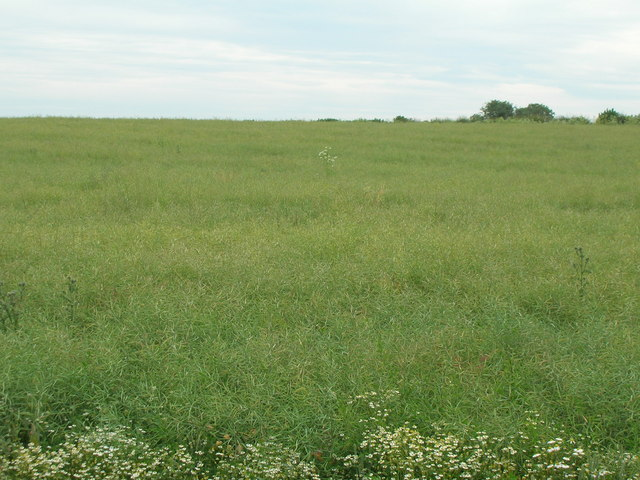 Farmland off Car lane, Car Colston