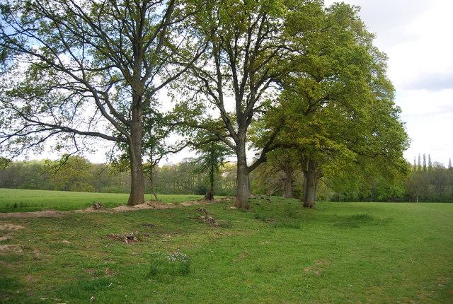 Earth bank near Hammond's  Farm