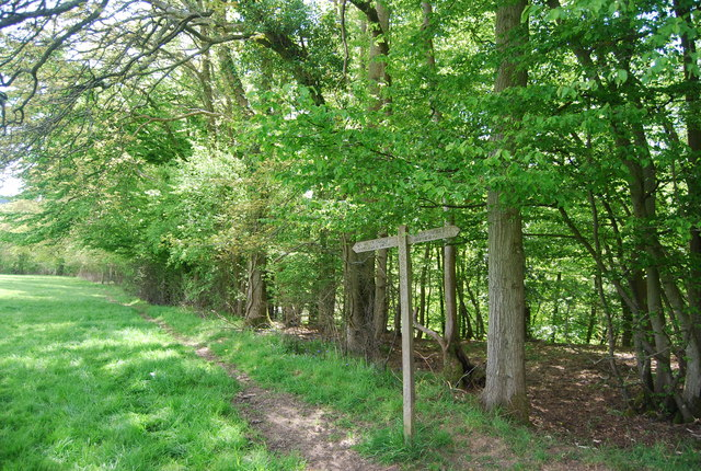 Sussex Border Path follows the edge of the woodland