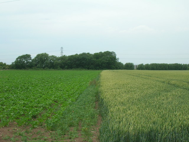 Mixed crops off New Lane