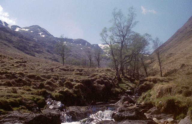Brook and Birches, Glen Quioch