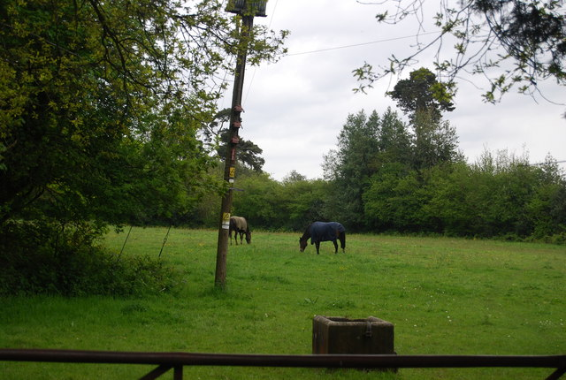 Horses on the edge of Horsted Keynes