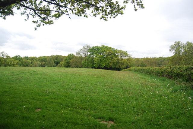 Field by Wyatt's Lane