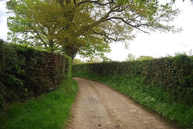 Wyatt's Lane (Sussex Border Path)
