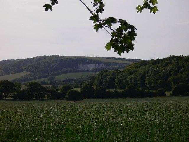 Field near Bepton