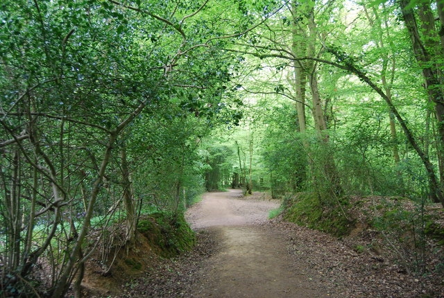 Sussex Border Path: Sandpits Wood