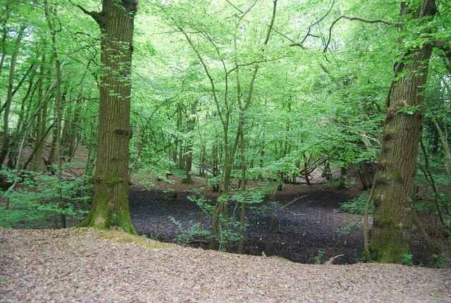 Boggy pond, Sandpits Wood