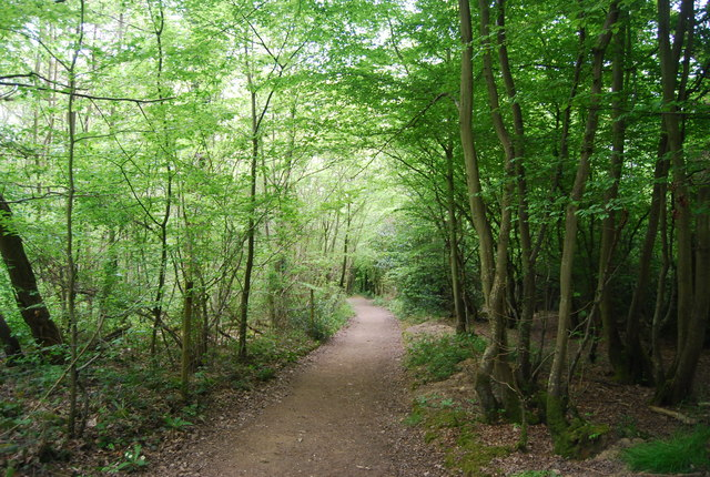 Sandpits Wood: Sussex Border Path