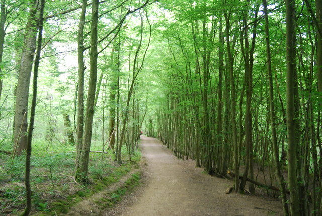 Sussex Border Path, Sandpits Wood