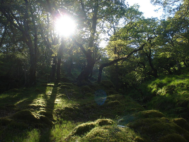 Magical sessile oak woods