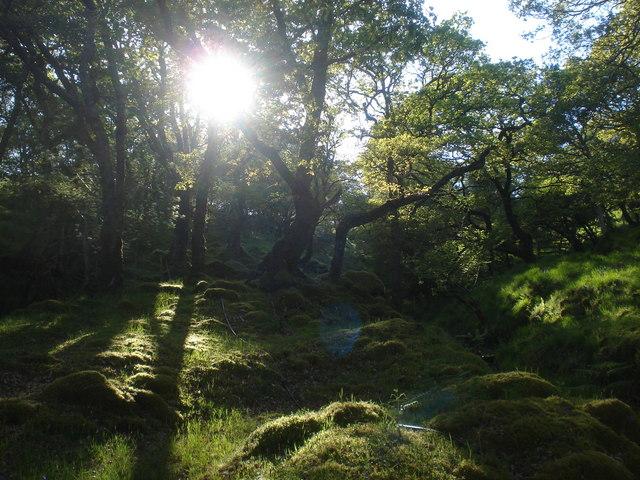 Magical sessile oak woods