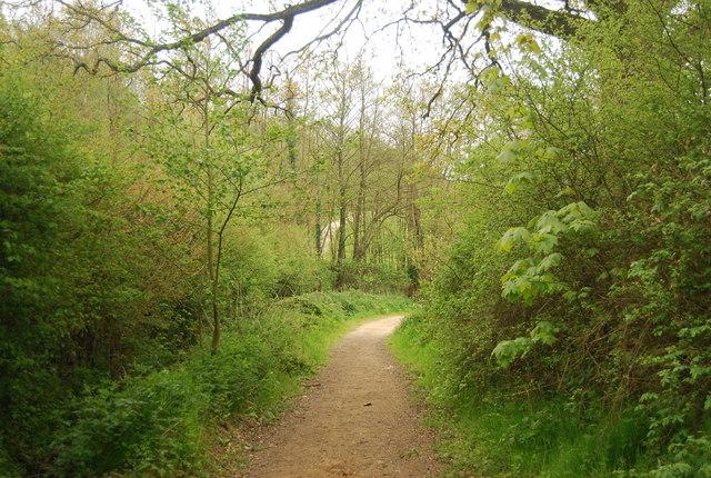 Sussex Border Path, Sandpits Wood