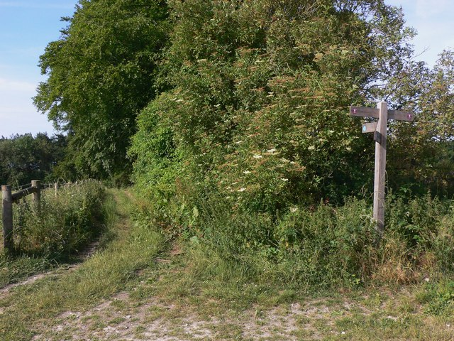 Bridleway off the South Downs Way