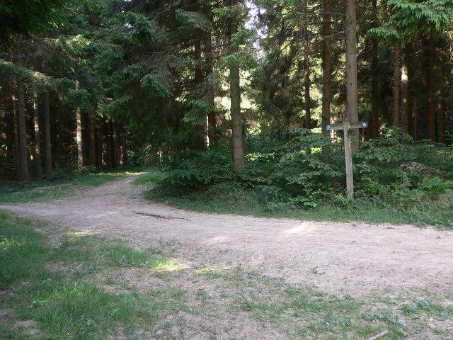 Bridleways cross in Linchball Wood