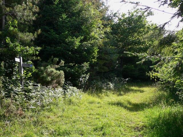 Bridleway in Newfarm Plantation