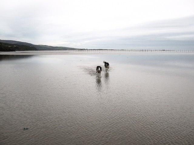 Racing through the water