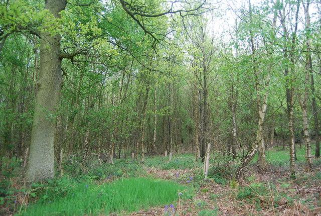 Pepper Wood