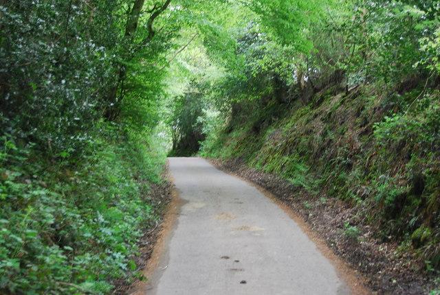 Sussex Border Path in a sunken lane