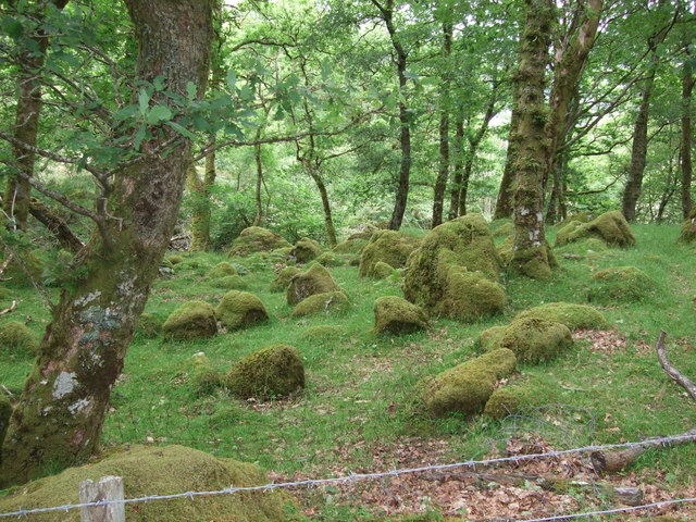 Moss covered boulders near Hendre (1)