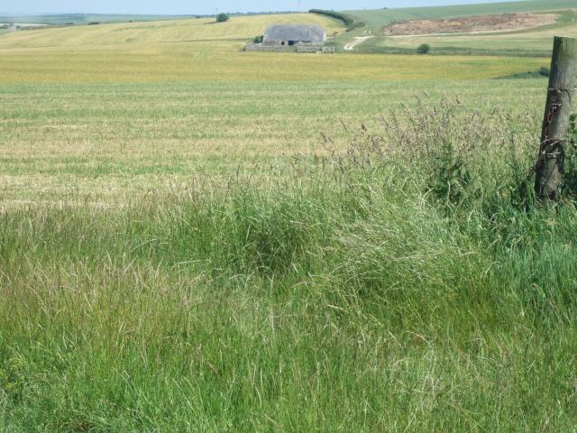 Chaldon Down and Down Barn