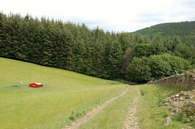 Approaching the Montrose Plantation, Philiphaugh