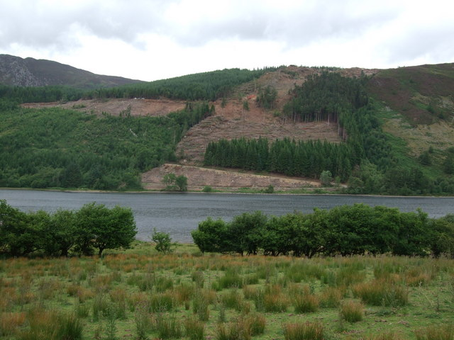 View of forestry clearance works on northern side of Llyn Crafnant