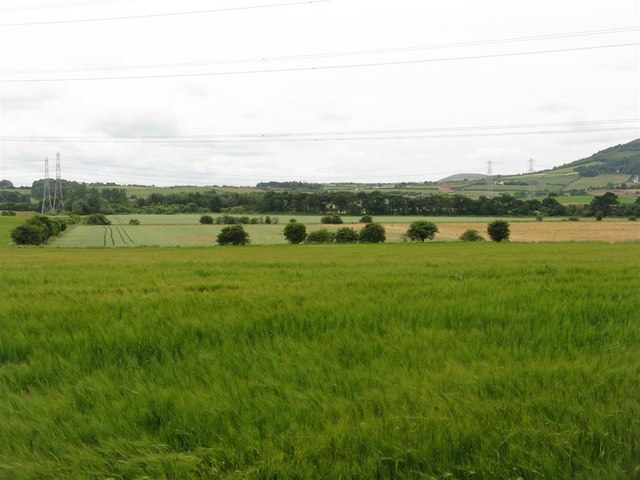 Spring barley and other crops at Mortonhall