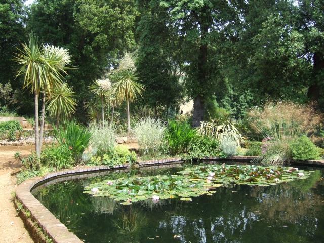 Lily pond in Abbotsbury subtropical gardens