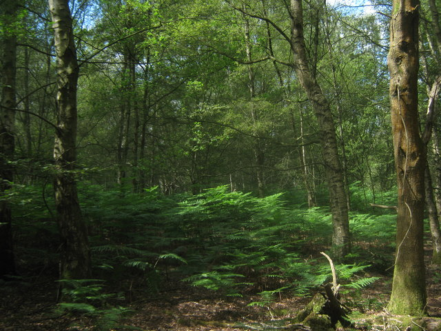 Holtye Common Wood