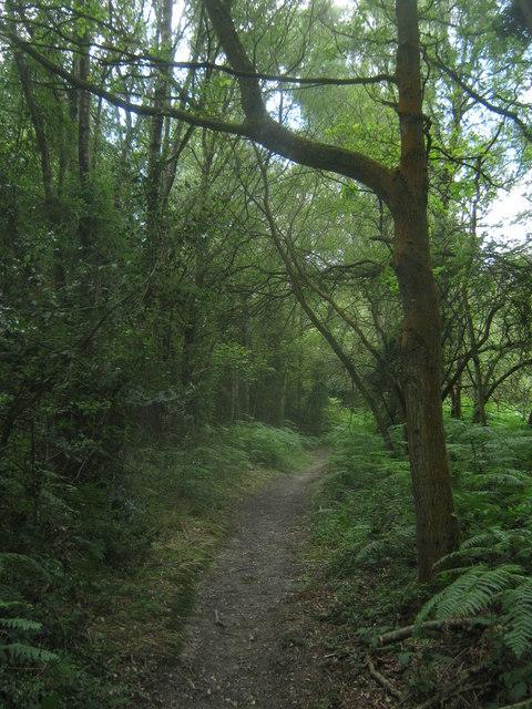 Bridleway in Holtye Common Wood