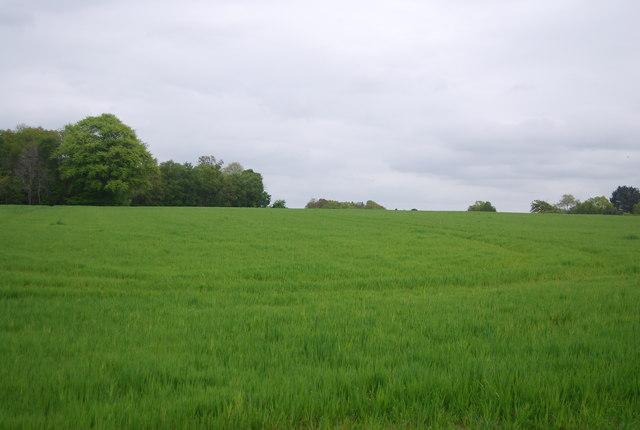 Arable land between Pepper Wood and Freshfield Lane
