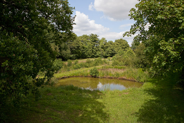Small pond at Crampmoor Fish Farm