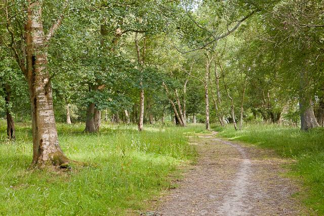 Woodland at Crampmoor