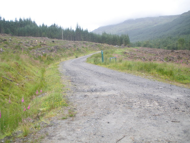 Forestry road leading to Coilessan Glen