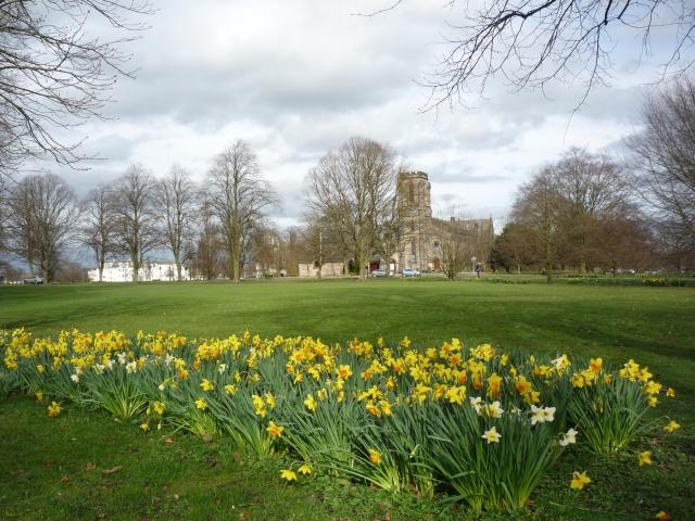 Daffodils near Christchurch