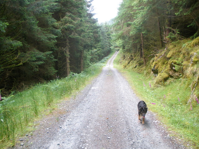 Forestry Road Ardgartan