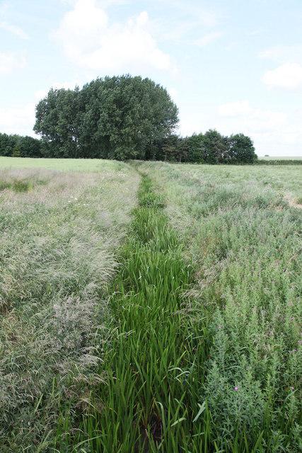 Overgrown footpath running through crop field