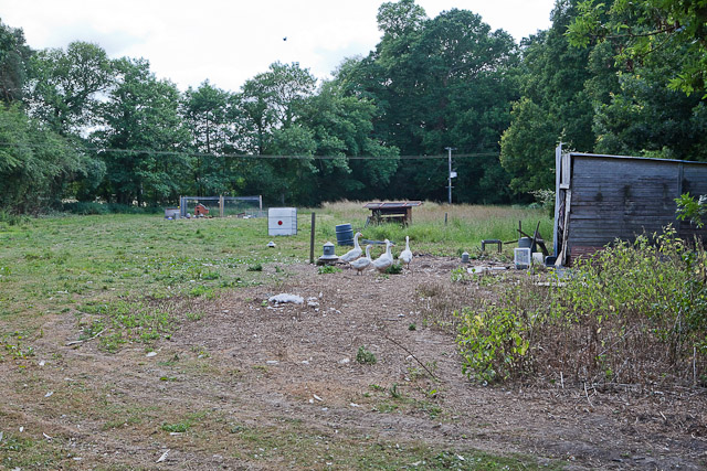 Field off Green Lane